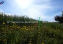 """Settimana della Biodiversità in Puglia 2021  """"Un evento per Valorizzare, Raccontare e Tutelare l'Agrobiodiversità Pugliese"""""""